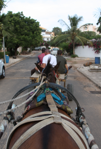 Just cruising the 'hood in a horse cart on a Friday evening. Why? What did you do this weekend?