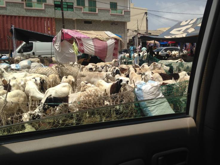 My friend Susie took this ram-errific photo today. Dakar is just packed with them!